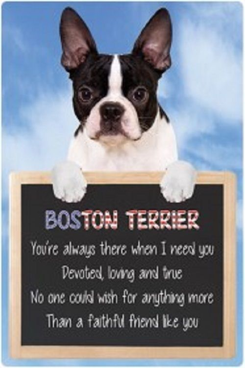 Boston Terrier  3D home hang up sign