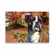 Boxer Dog Card pack of five