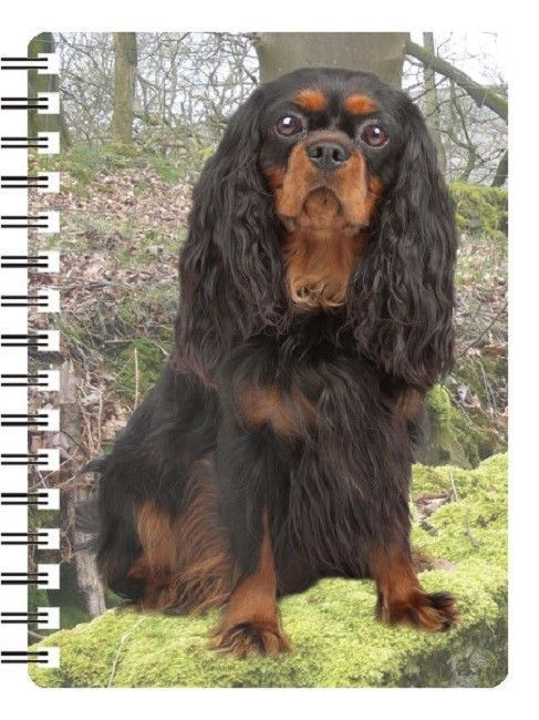 Cavalier King Charles Black and tan Spaniel 3D Notebook black and ruby