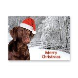Chocolate Labrador Christmas Card pack of five