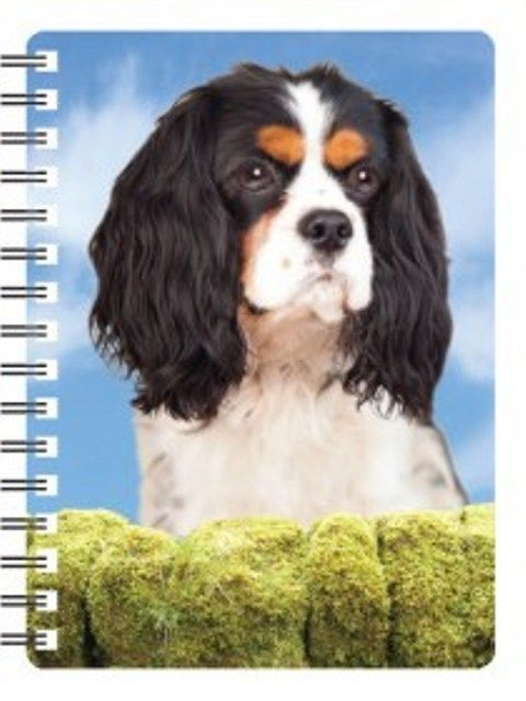 King Charles Cavalier Tri colour 3D Notebook