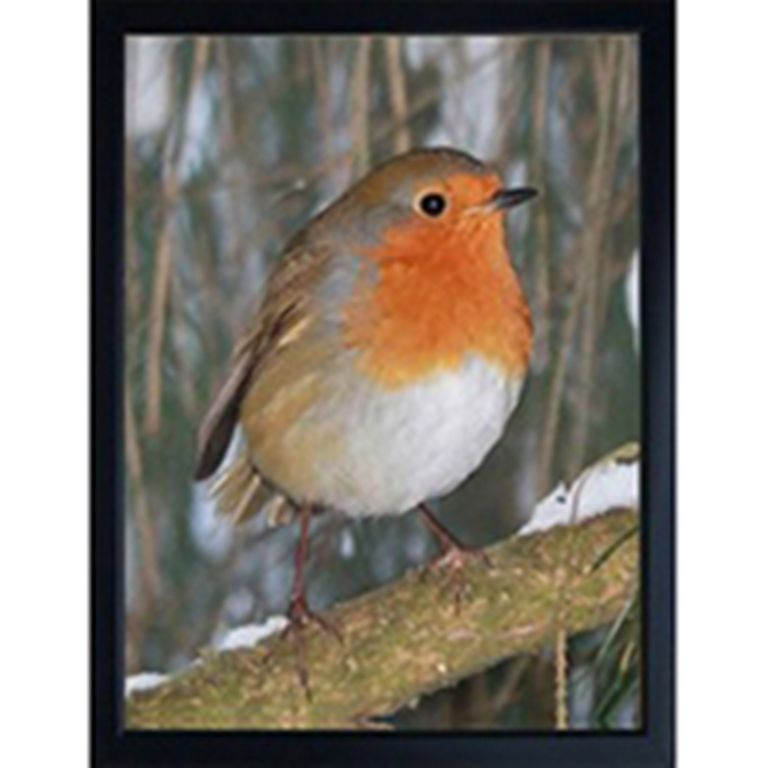 ROBIN 3D FRIDGE MAGNET