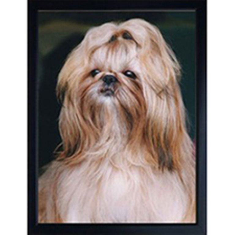 SHIH-TZU 3D FRIDGE MAGNET