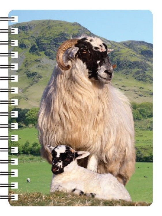 Black faced Sheep with lamb 3D Notebook, Ideal Christmas stocking filler