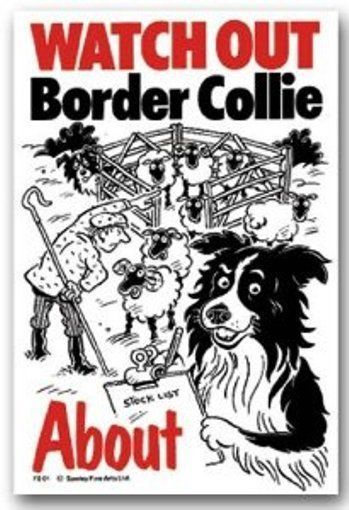 BORDER COLLIE ABOUT WATCH OUT