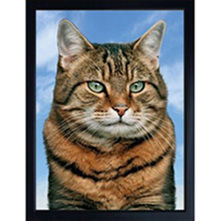CAT (TABBY) 3D FRIDGE MAGNET