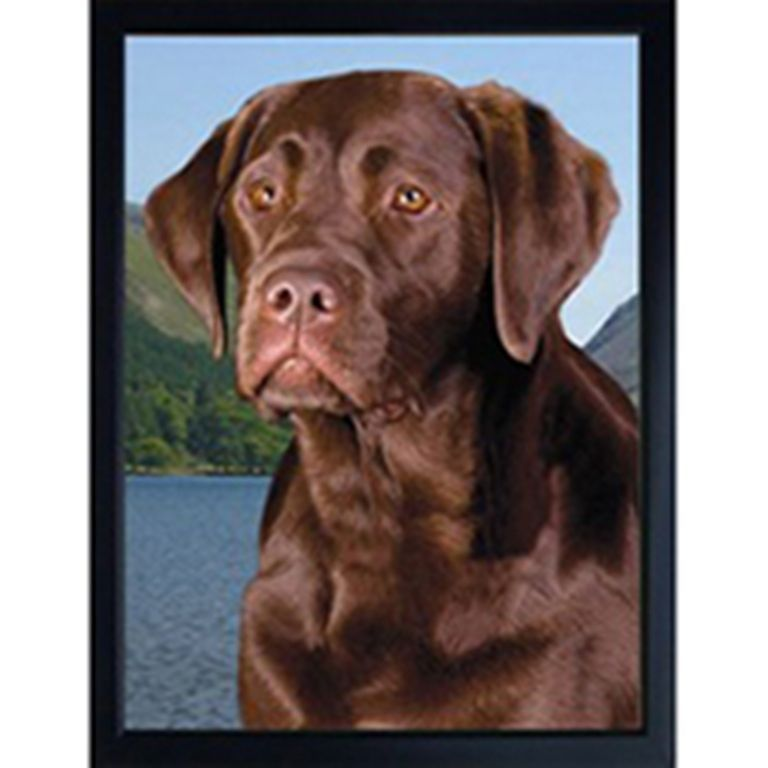 CHOCOLATE LABRADOR 3D FRIDGE MAGNET