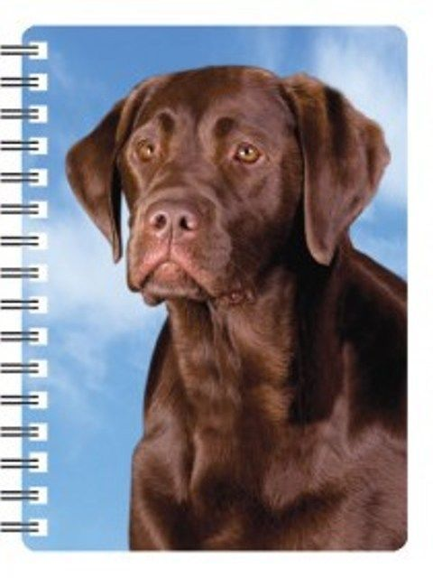 Chocolate Labrador 3D Notebook