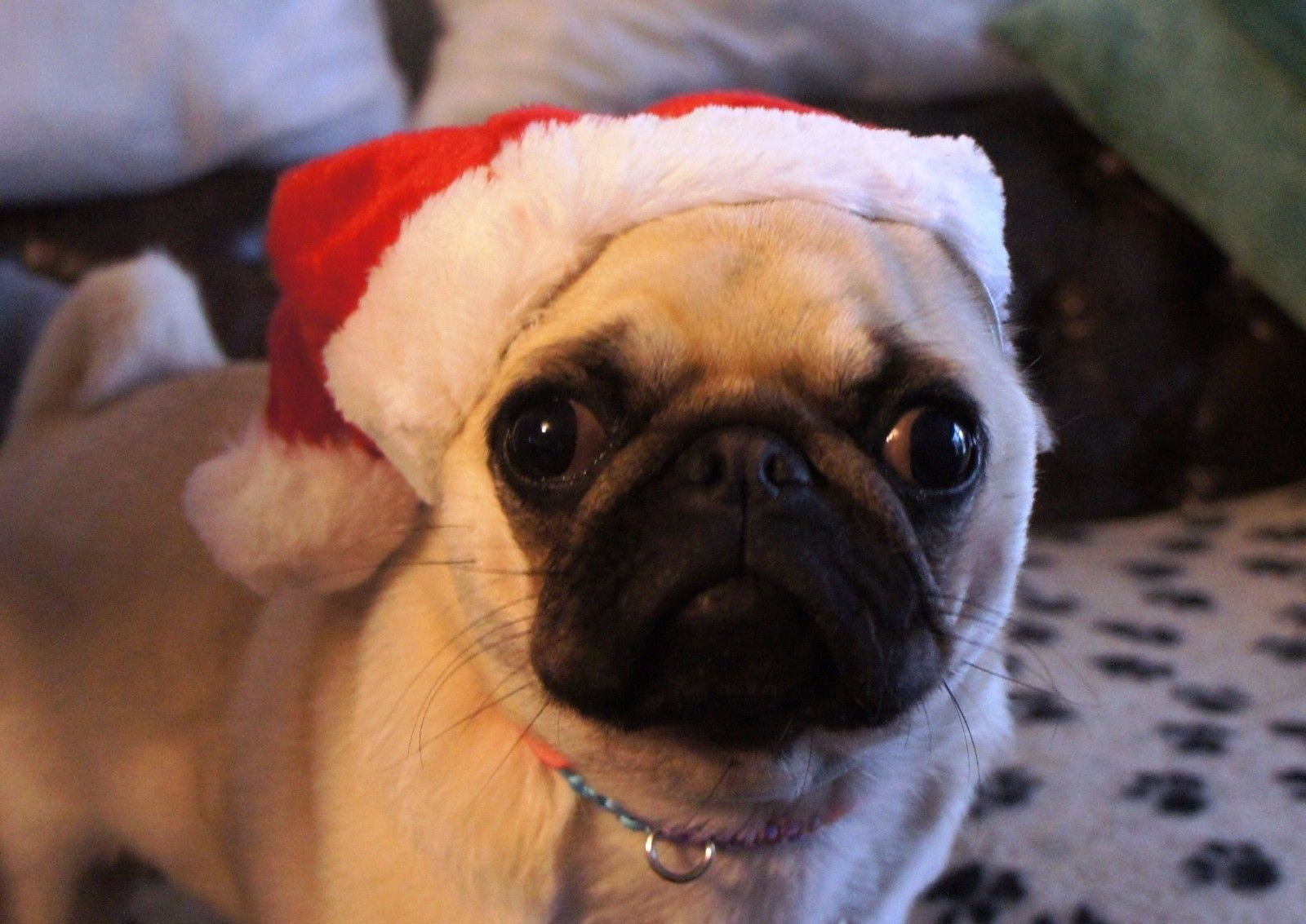 Christmas Dog Hat One Size Festive Soft Xmas Hat For Dogs And Puppies