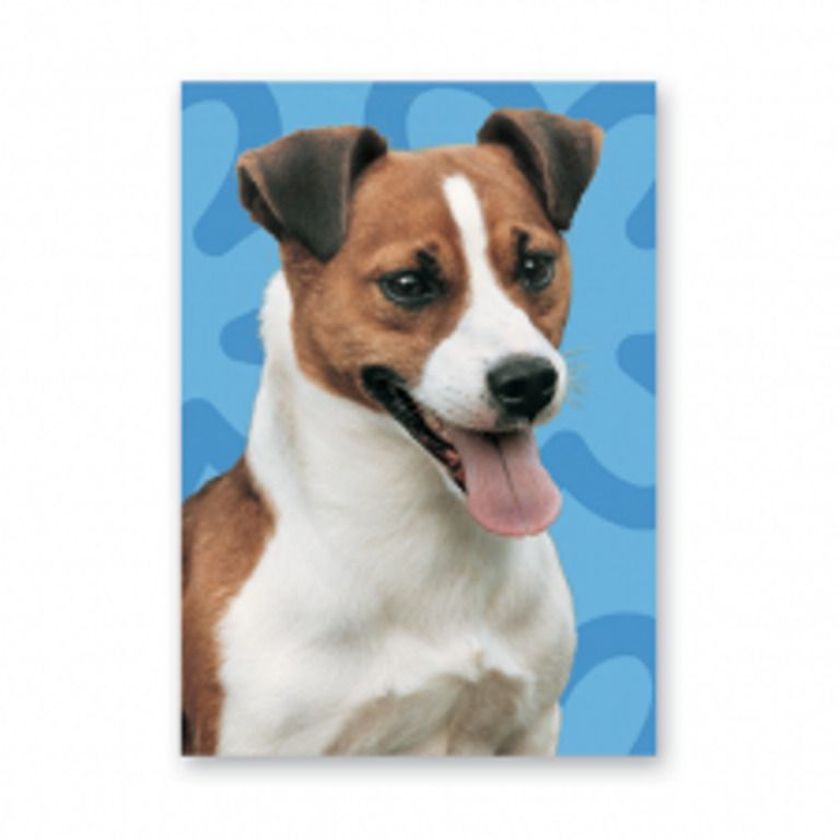 Jack Russell greeting card blue background