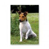 JACK RUSSELL TERRIER PARSONS SHORT HAIRED CARD