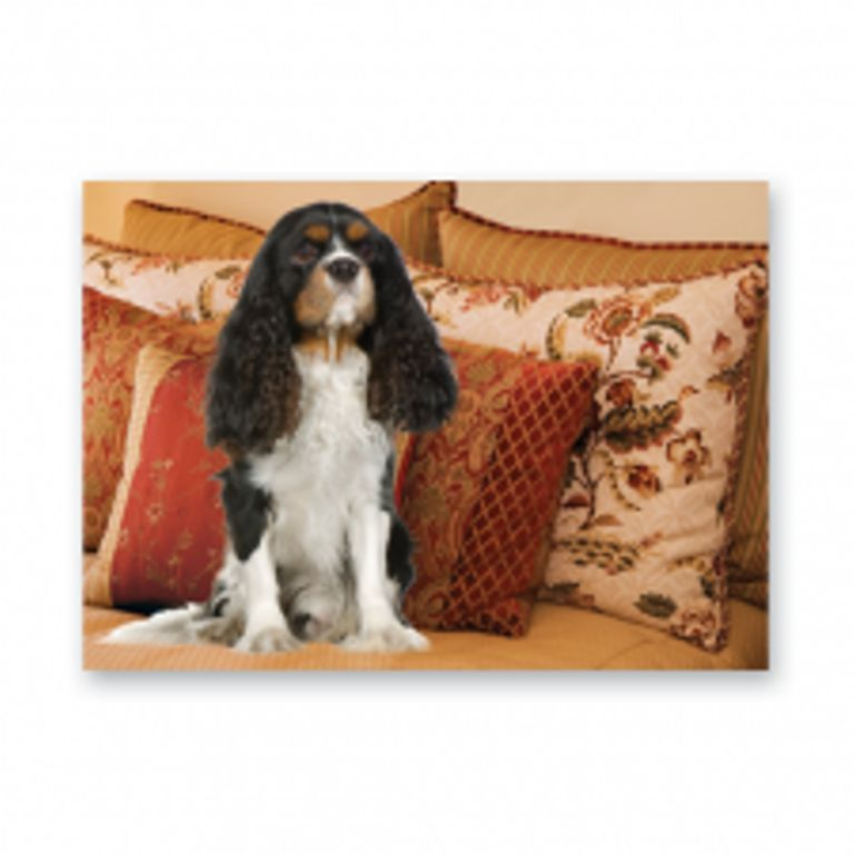 KING CHARLES CAVALIER GREETINGS CARD