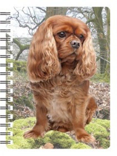 King Charles Cavalier Ruby 3D Notebook