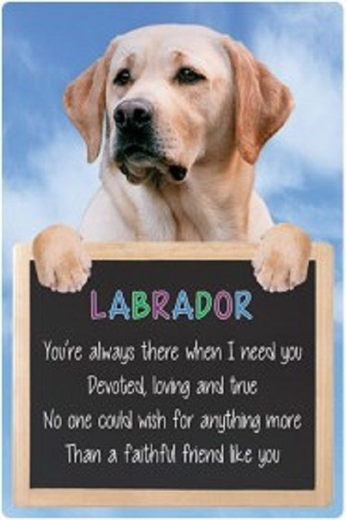 Labrador 3D home hang up sign