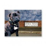 Staffordshire Bull Terrier Greetings Card