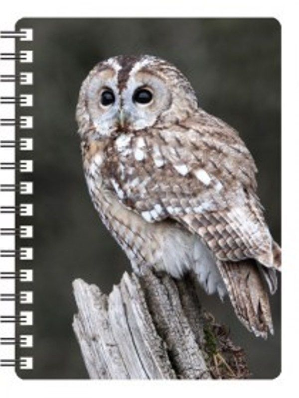 Tawny Owl 3D Notebook